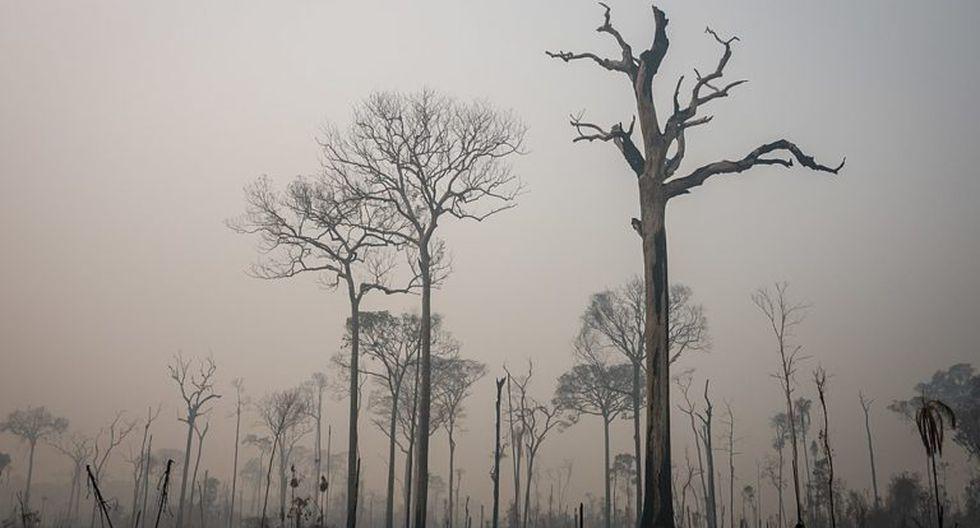 De acuerdo al Programa Nacional de Conservación de Bosques adscrito al Ministerio del Ambiente, el año pasado se deforestaron 147 mil 402 hectáreas de bosque amazónico cifra que equivale a 4.7% menos de lo reportado durante el año 2018, año en que se perdieron 154 mil 766 hectáreas de bosque. (Foto referencial).
