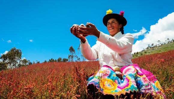 Los agricultores del distrito de Pazos, en Huancavelica, producen papa nativa orgánica y la procesan en chips que exportan a cinco países de Europa. (Foto: Difusión)