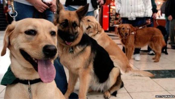 Estados Unidos: El escándalo de los falsos perros guía