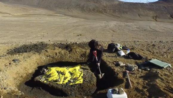 Recogen una tonelada de fósiles de dinosaurios de la Antártida