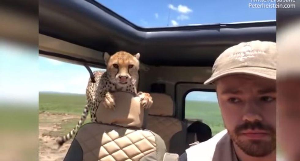 Hayes siguió las indicaciones del guía para no ser atacados por los guepardos. (Video: YouTube)