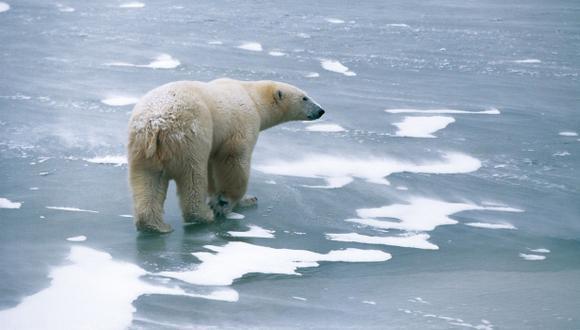El hielo ártico sigue desapareciendo, según científicos