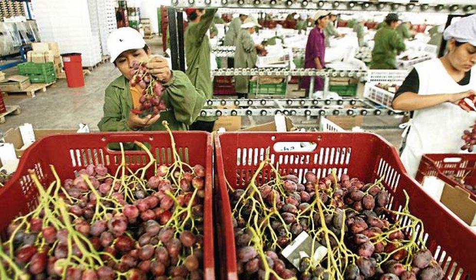 Los despachos de uva fresca representaron el 25.5% de las exportaciones de frutas como productos no tradicionales en 2018. (Foto: GEC)<br>