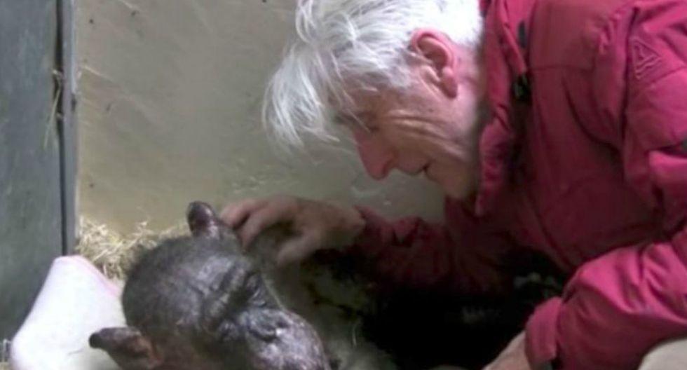 'Mama', una primate de 59 años que era la matriarca de una colonia de chimpancés en un zoológico de Holanda, recibió la visita de un profesor universitario al que conoció en 1972. (Foto: Captura)