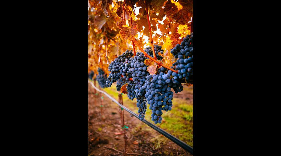 Recorre las 7 mejores rutas del vino en el mundo - 2