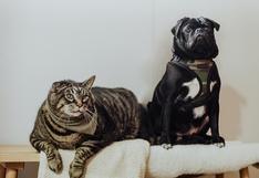 ¿Tienes un gato en casa y quieres adoptar un perro? ¡Sí es posible!