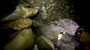 Colombia : mineros hallan restos fósiles de mastodonte extinto hace 10.000 años