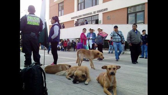 Junín: lanzan campaña para esterilización de perros en El Tambo