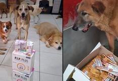 Pese a la coyuntura, WUF logró una de las donaciones más grandes de medicamentos para mascotas en 2020