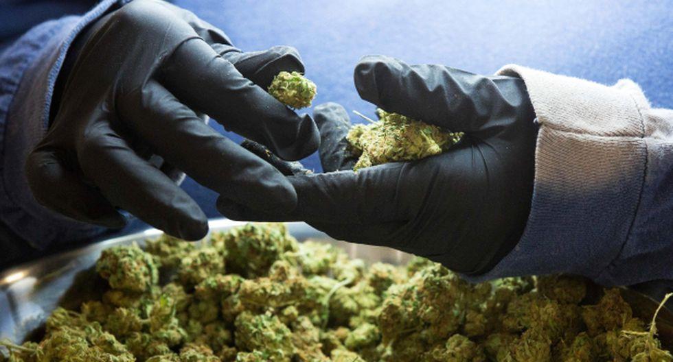 México: Senado aprueba uso de marihuana con fines medicinales