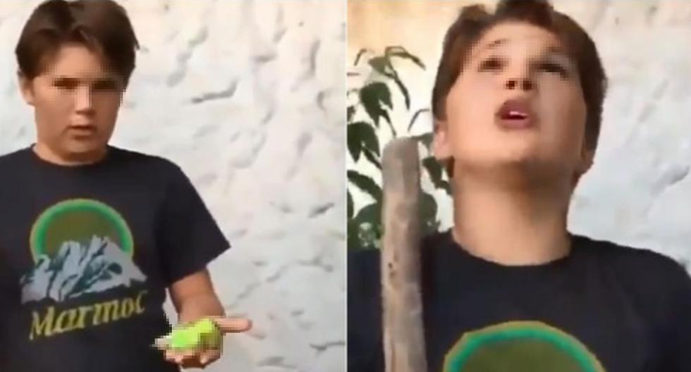 Un niño llamado Renato jamás imaginó que el entierro de su periquito se volvería viral a nivel mundial. (Foto: captura Facebook)