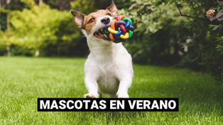 Cuidado de las mascotas en verano