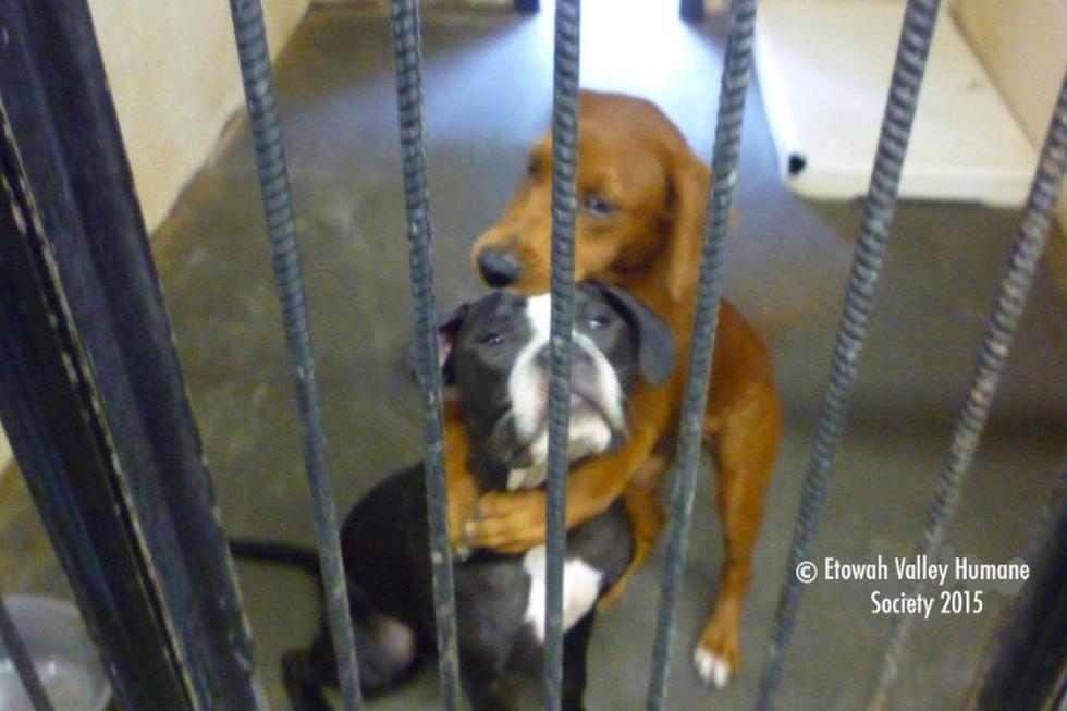 Foto 1 de 5 | Las perritas corrían el riesgo de morir, pero una foto de las dos abrazándose las salvó. (Facebook: Kala & keira Hugging Dogs)
