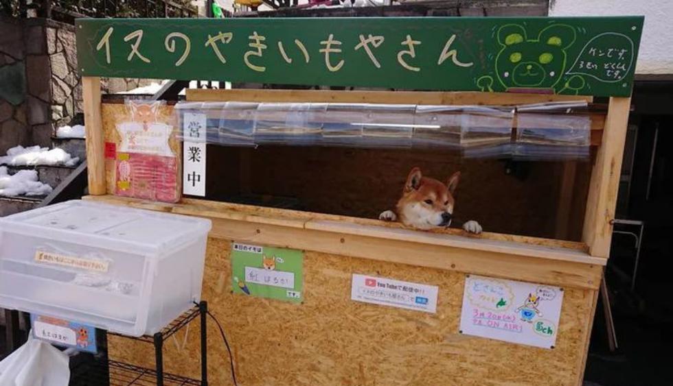 Ken-kun administra un puesto de comida en la isla japonesa de Hokkaido y se ha vuelto una celebridad en redes sociales. (Fotos: @hina_shii_ver2 en Twitter)