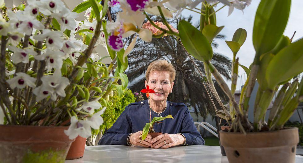 La presidenta de la Sociedad Peruana de Orquídeas, Susi Splitter, sostiene en sus manos un ejemplar de la especie Phragmipedium besseae, originaria de San Martín. En su casa cultiva cientos de variedades desde hace 30 años. (Foto: Fidel Carrillo)
