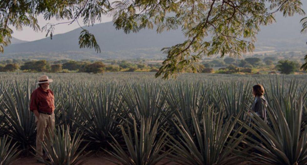 Monarca - Tequila, Jalisco. (Foto: Netflix)