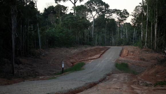 La tala ilegal va desapareciendo los bosques del país.  (Imagen referencial/GEC)