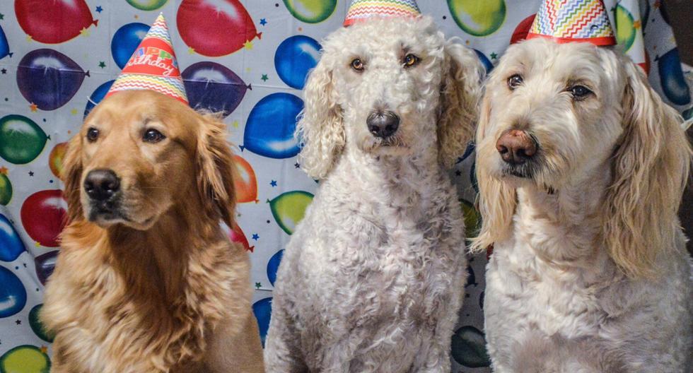 Un perro que celebraba su cumpleaños no tenía ganas de compartir y reaccionó así cuando iban a partir la torta. (Foto: Pixabay/Referencial)