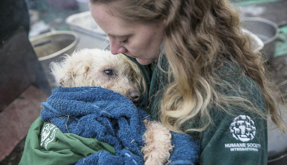 Los voluntarios de Humane Society International rescataron a los animales enjaulados en Corea del Sur. (Humane Society International / Facebook)<br>