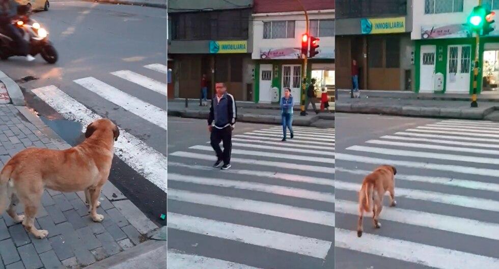 El perro esperó que el semáforo peatonal se pusiera en verde para cruzar la calle. (Facebook)