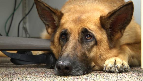Un perro enfermo obliga a un avión a aterrizar de emergencia