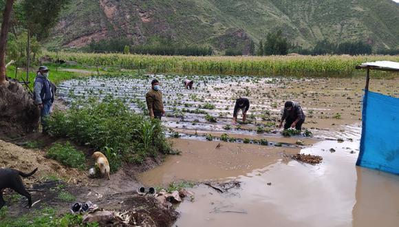 Cultivos de maíz y fresas quedaron inundados por el desborde del río Vilcanota. (Foto: Juan Sequeiros)