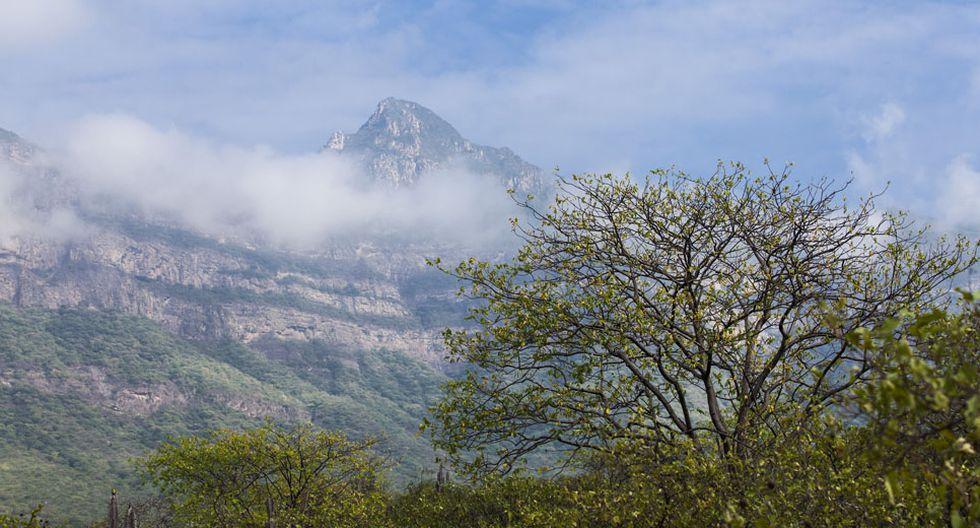 Reserva de Chaparrí. Puedes encontrar tours desde 70 soles por persona.(Foto: PromPerú)