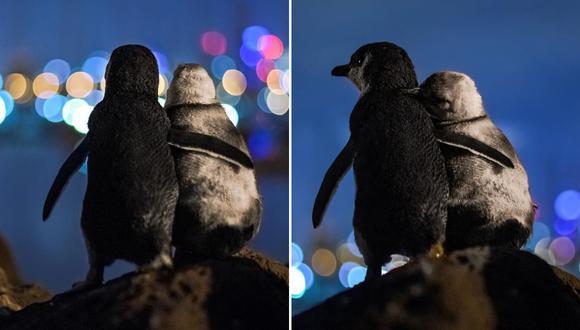 Dos pingüinos protagonizaron una conmovedora escena que fue retratada por el lente de un afortunado fotógrafo. (Foto: @tobiasvisuals en Instagram)