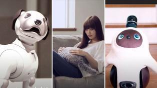 Conoce a los robots que compiten con las mascotas