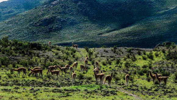 El Santuario Histórico de Machu Picchu y la Reserva Nacional Calipuy celebran hoy su aniversario por sus 40 años de creación como área natural. (Foto: Sernanp)