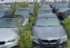 Más de 3.000 autos BMW completamente nuevos están abandonados y oxidándose al aire libre en Vancouver [VIDEO]