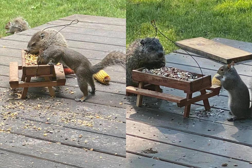FOTO 1 DE 3 | Un video viral muestra cómo una marmota y una ardilla toman desayuno cada mañana en una mesa de picnic miniatura construida por los dueños de una casa. | Crédito: Storyful / YouTube. (Desliza a la izquierda para ver más fotos)