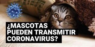 Coronavirus: perros y gatos no pueden contagiarse y transmitir virus Covid-19