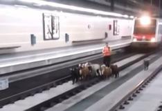 Un rebaño de cabras invadió una estación de trenes en Barcelona