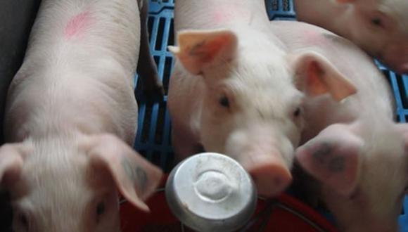 La Organización Mundial de Sanidad Animal – OIE reconoció al Perú como país País Libre de Fiebre Aftosa sin vacunación contra la fiebre aftosa en el 2013. En la región. Chile y algunas zonas de Argentina y Brasil cuentan con esa condición, resalta Miguel Quevedo, jefe del Senasa.