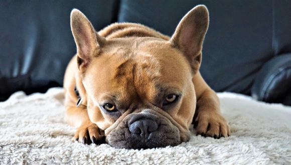 Es muy incierto el destino de los perros abandonados. No todos logran ser rescatados por un refugio. (Foto: Rudy and Peter Skitterians / Pixabay)