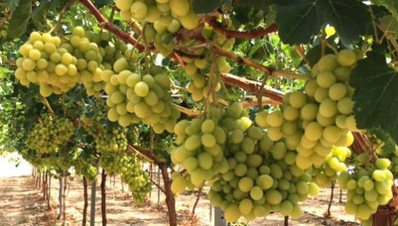 Las exportaciones de uvas frescas suman 168,889 toneladas en lo que va del 2019. (Foto: GEC)
