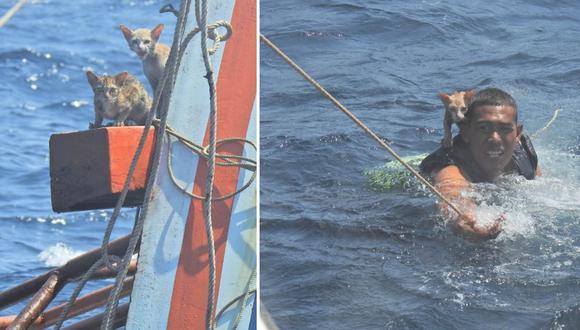Los marinos de Tailandia lograron rescatar a los gatos que estaban atrapados en una embarcación en llamas.   Foto: Wichit Pukdeelon