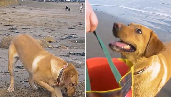 La mascota predica con el ejemplo y ayuda con las tareas de limpieza de la playa recogiendo todos los desechos que pueda. (Foto: SWNS en YouTube)