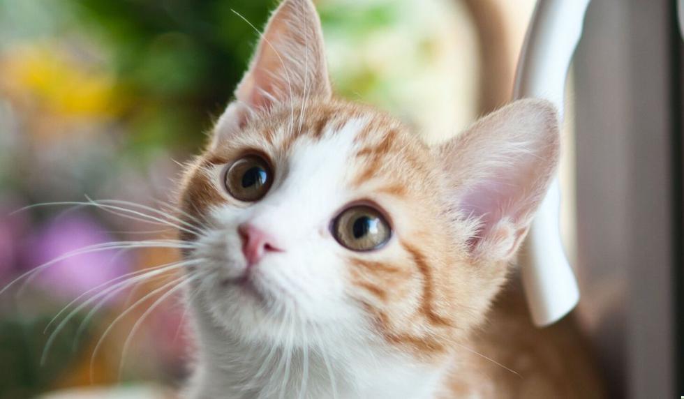 Las fotos del gato se volvieron virales en Facebook. Desliza para verlas todas. (Foto referencial: Pexels)