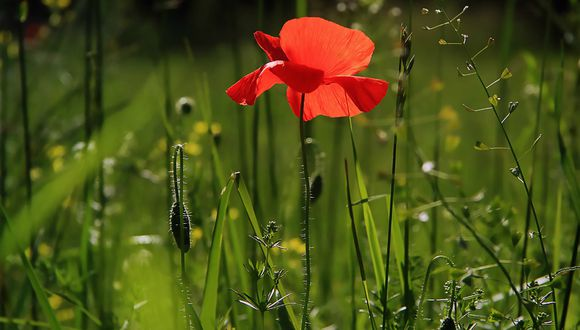 Conservacionistas en Indonesia han registrado la flor 'más grande del mundo'. (Foto: Referencial/Pixabay)