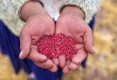 Perú se mantiene como primer productor y exportador de quinua en el mundo