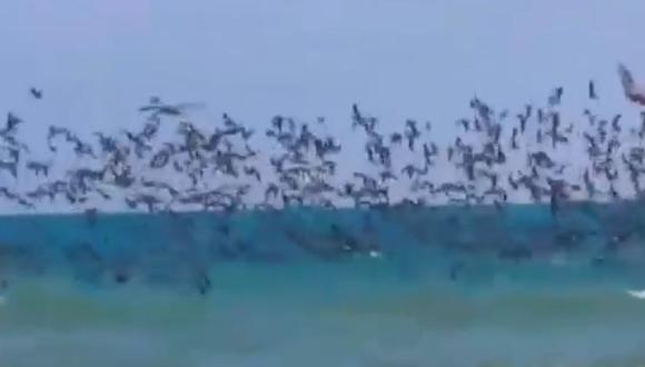 En YouTube circula un video que alcanzó popularidad rápidamente por el llamativo comportamiento de estas aves, aunque sea por algo razonable. (Foto: captura de video)