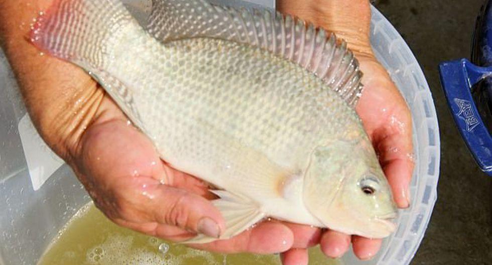 Piel de pescado, el remedio contra las quemaduras de Brasil