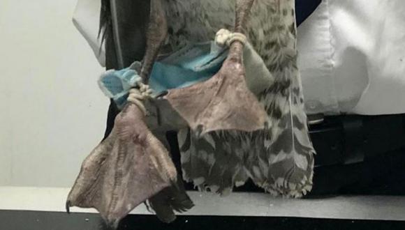 Los elásticos de la mascarilla se habían envuelto fuertemente alrededor de las patas de la gaviota. | Crédito: RSPCA.