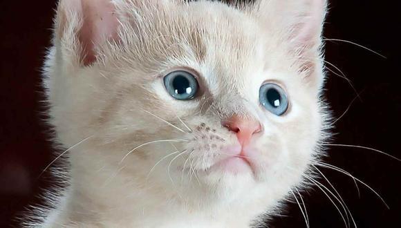 Estas viviendas son los hogares ideales para los amantes de los gatos. (Foto: Ty Swartz / Pixabay)