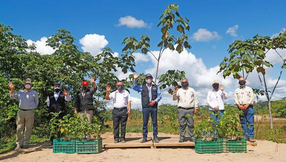 Gobierno logra reforestar el 100 % de las zonas afectadas por la minería ilegal en la Reserva Nacional Tambopata. (Foto: Sernanp)