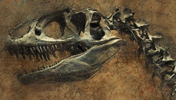 Hace 66 millones de años se produjo la extinción masiva del Cretácico-Paleógeno, que acabó con el 75 % de las especies terrestres. (Foto: Pixabay/Referencial)