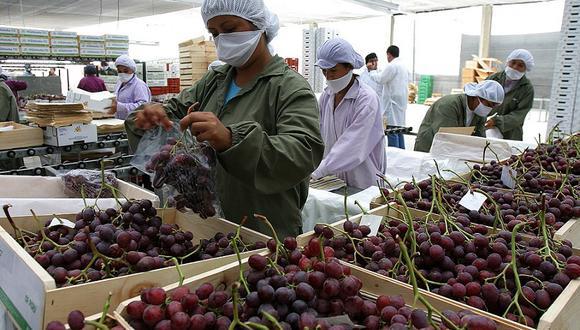 Las agroexportaciones crecieron 17% en agosto, según informó ADEX. (Foto: GEC)