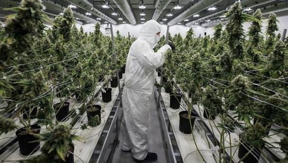 La producción de marihuana se disparó, pero no tanto la demanda. (Foto: Getty Images)